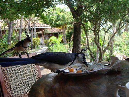 Hotel in Ometepe