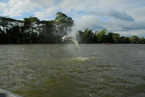 Tarpon fishing on Rio San Juan